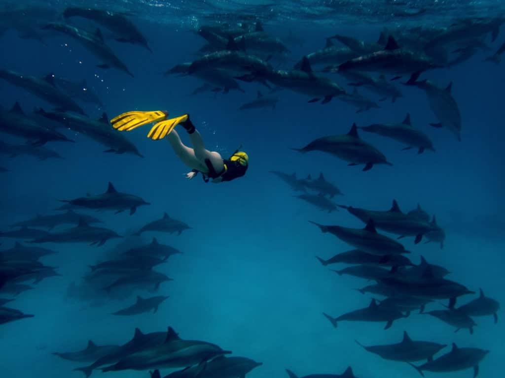 Freediving lernen hat sehr viele Vorteile